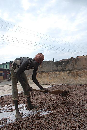 地面いっぱいにココを広げる労働者。2010年8月4日 イフェ、イロデ地区のココ集荷場にて
